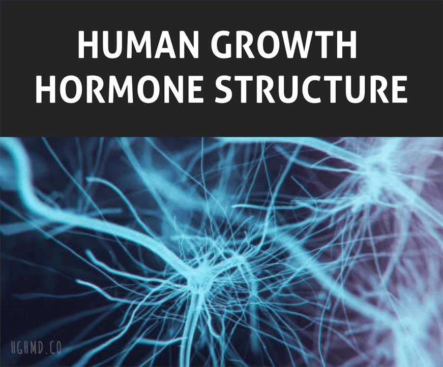 Human Growth Hormone Structure
